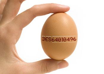 huevo-codigo-side